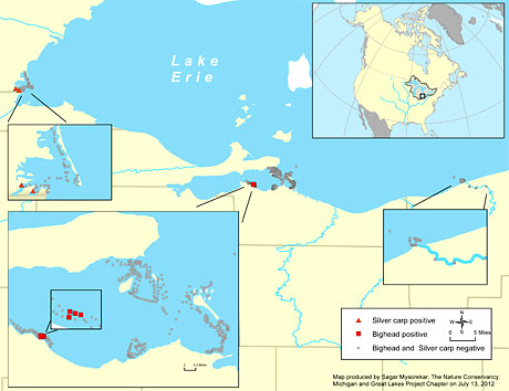 Locations of Lake Erie water sample sites, with Asian carp eDNA positive locations marked in red (bighead carp) and orange (silver carp). Map credit: Sagar Mysorekar, The Nature Conservancy.