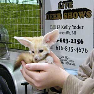 Get your picture taken with the African fennec fox cub at Yoder's Live Big Game Show during the Ultimate Sport Show