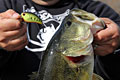 IMA square bill crankbait with a largemouth bass