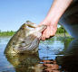 Lake Ovid Largemouth Bass Fishing A Little Taste of the South