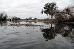 2011 Bassmaster Classic contenders will face many options including floating and dead water hyacinth