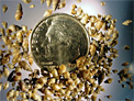 Up to 50 New Zealand Mud Snails can fit on a dime due to their small size of 1/8th inch maximum