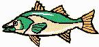 GreatLakesBass.com Bass Fishing Humor article backwater bass or green trout fish
